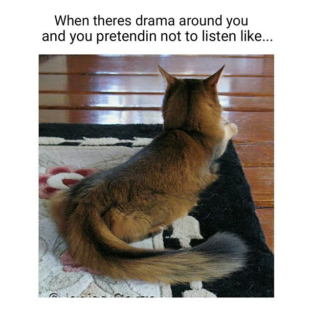 drama-around-you-pretending-not-to-listen-like-meme