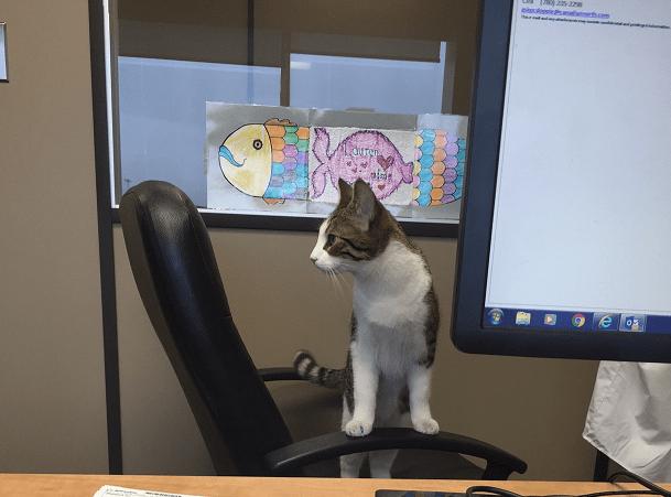 Meow meow 2