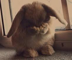 crying bunny 6.13