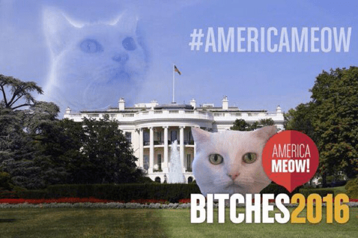bitches-and-white-house