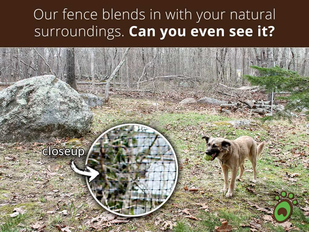 blends-in-dog-mouth