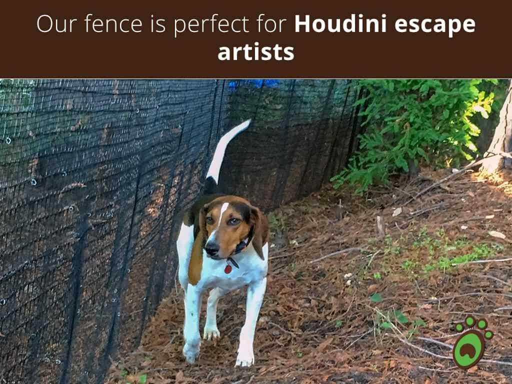 Houdini-escape-artists