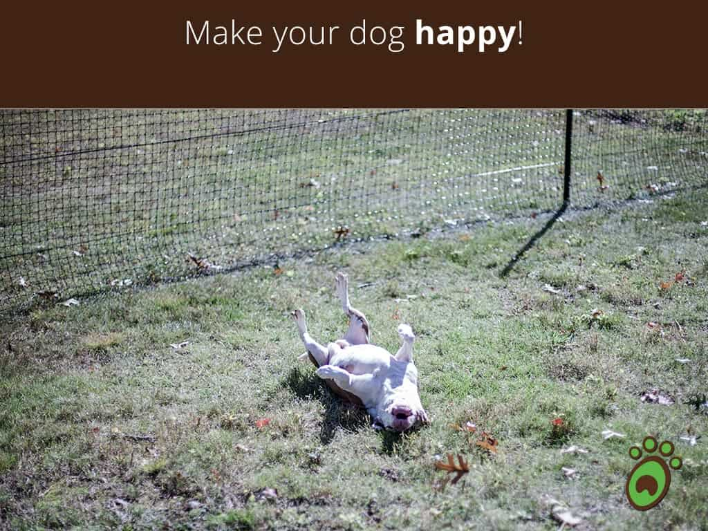 happy-dog