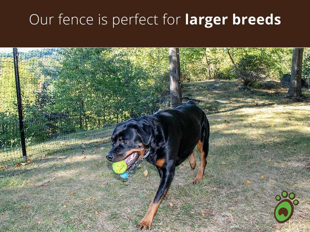 larger-breeds-dog-fence
