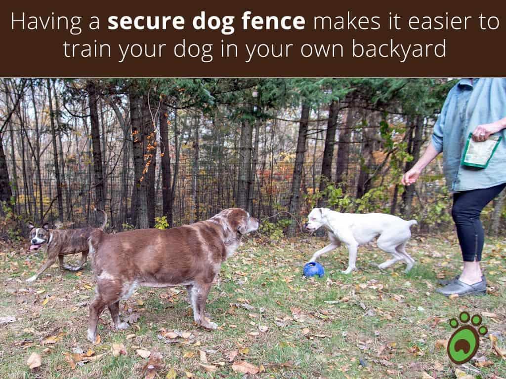 training-dog-fence
