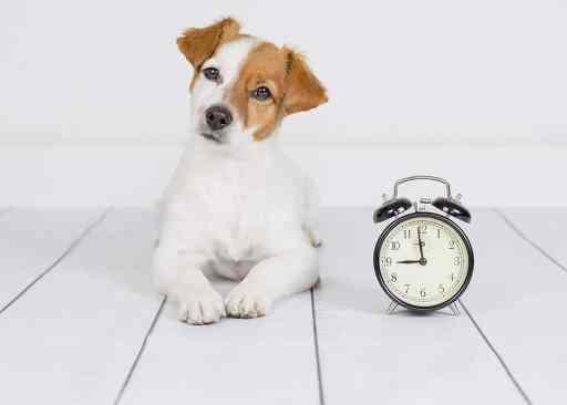 puppy routine