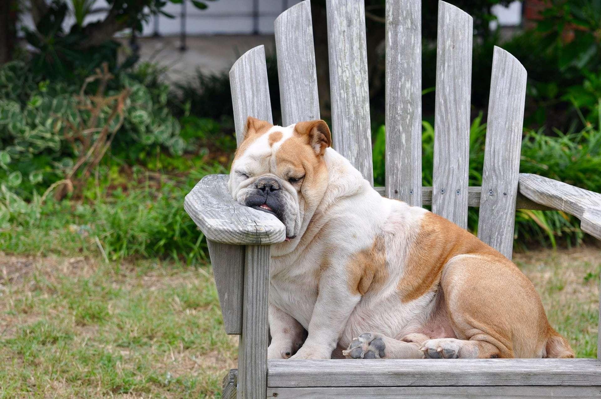 Do Not Disturb Pet Boarding at Pet Ponderosa