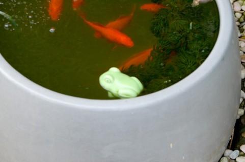 水槽の置き場所はどこがベスト?魚を飼う時の水槽