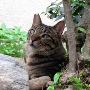 猫が外に行って帰ってこない時に考えられる理由