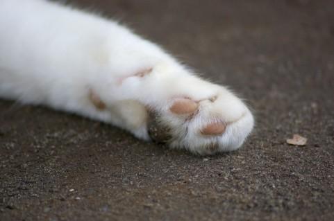 猫が猫パンチをする時の意味や心理まとめ。遊びたいか嫌な気持ちかのいずれか