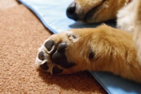 犬にお手を覚えさせる方法3つ