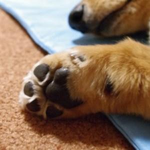 犬にお手を覚えさせる方法