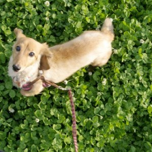 犬の老衰時に見せる症状