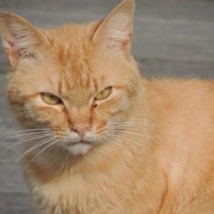 猫が突然家出をした時の心理や理由