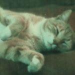 Jasper The Cat: A Survivor And Teacher