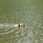 Teaching your dog to swim