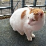 Moses the Cat Inspires a New Life Path