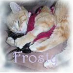 Frosty the Frozen Kitten