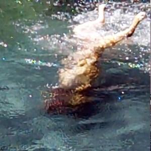 bardotdivingin