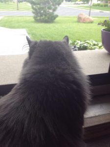Saffy looking through screen door