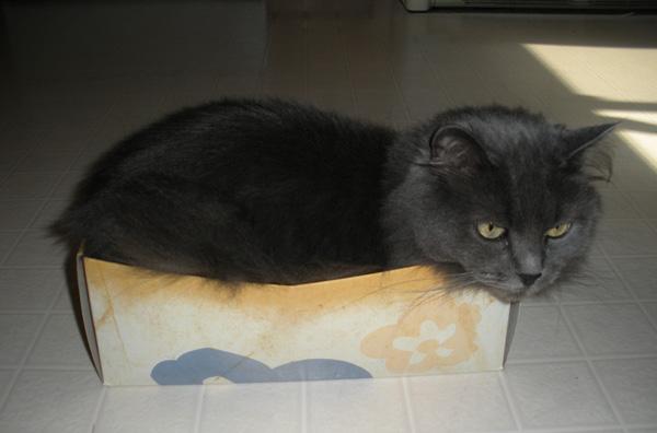 Saffy in a box