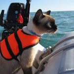 Bailey the Cat of the Sea