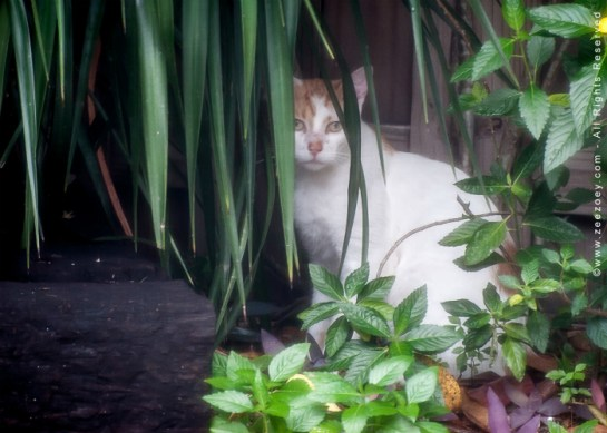 2. Outdoor Cat