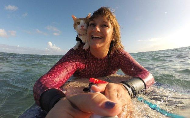 858x536xkuli-cat-surfing-s_3541365k.jpg.pagespeed.ic.v-4HBksz8h