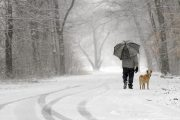 El Nino Dog Walking Survival Guide