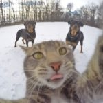 Manny the cat who takes his own selfies