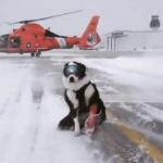 Piper the Border Collie Has Important Job at Michigan Airport