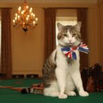Things a Politician Can Learn from a Cat