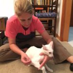 Integrative Veterinary Medicine: Why is it so hard to find?