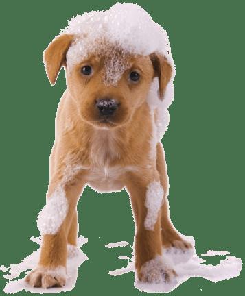 dog-wash-home