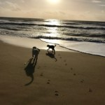 Finding a Voice for the Love of Dogs: a life changing story