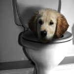 Does Your Dog or Cat Have a Drinking Problem?