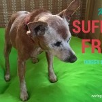 Doggy Dementia: Is That Why My Dog Stares at the Wall?