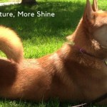 Podcast- Getting Green With Eco Dog Care