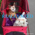 Senior Moments-The Single Most Important Thing You Must Know About a Pet Stroller