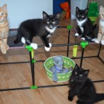 The Hardest Part of Fostering Kittens and Why I Still Do It