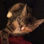 Twerk the Dancing Kitten Steals a Young Woman's Heart