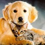 Podcast-Cat and Dog Food with Probiotics