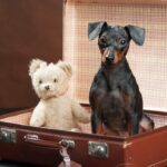 Awesome Tips For Stress Free Moving With Your Senior Dog