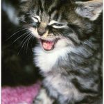 6 Steps to Keep Your Cat Smart