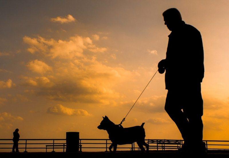 Understanding the Power of the Spiritual Bond Between Pet