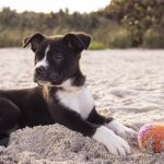 Safety Tips for Dogs on the Beach