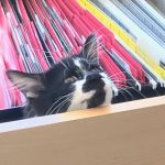 Podcast: ASPCA Cat Of The Year- Cat Named D.O.G.