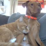 This Adorable Cat and Dog Just Want to Cuddle