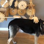 Homemade Automatic Dog Petter!