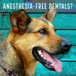 Are anesthesia-free dentals worth it for my dog?